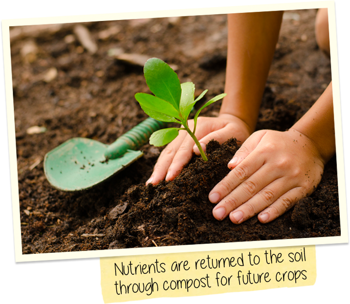 Nutrients are returned to the soil through compost for future crops