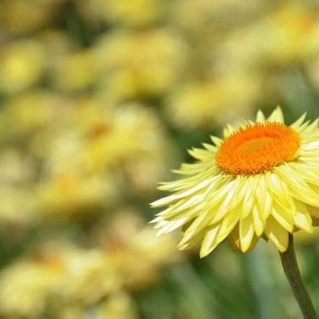 Compost-A-Pak - Rare Aussie Flora