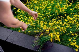 Native Flower Drying